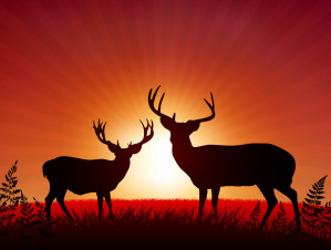 Deer Processing And Price Information From 4 Quarter Processing Missouri